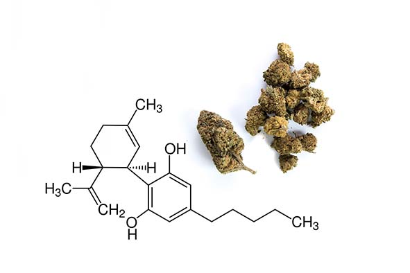 What is CBD/ and studios